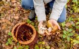 5 choses à savoir avant d'aller cueillir des champignons