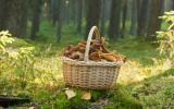 10 trucs (à manger ou pas) qu'on peut cueillir en forêt