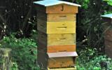 Tout savoir sur la fabrication du miel, le miel en cuisine et les cakes, l'édito de Pascale Weeks