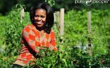 Nous voilà rassurés sur le potager de Michelle Obama