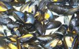 Moules marinières gourmandes