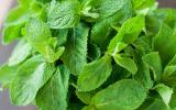 Quatre plantes détox pour tisanes post-fêtes