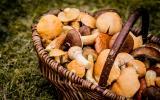 Champignons : 3 façons de les conserver