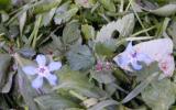 Salade d'herbes fraîches