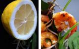 Salade de crevettes à la mayolive