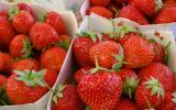 Mara des Bois, Guariguette, Charlotte : il y a vraiment une différence entre ces variétés de fraises ?