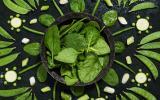Préserver sa ligne : 10 conseils pour choisir les bons aliments