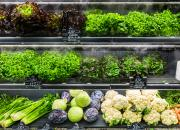 Laitue vs salade en sachet : pourquoi une telle différence de prix ?