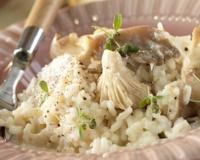 Recettes base de champignons sauvages les recettes les - Cuisiner les coulemelles ...