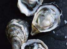 Focus sur les huîtres Gillardeau
