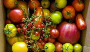 On profite des dernières tomates de saison avec ces idées