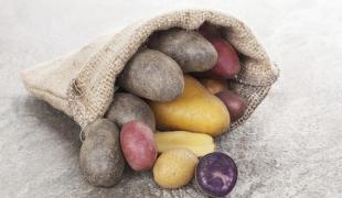 Savez-vous tout sur la pomme de terre ?