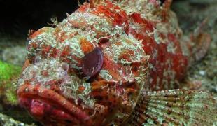 Top 10 des poissons pas très jolis