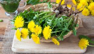 Cueillette sauvage : 3 plantes de printemps très faciles à trouver