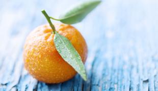 Quel sont les fruits et les légumes de février ?