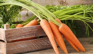 le vrai-faux des idées reçues sur la carotte