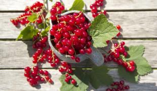 Les fruits et les légumes qui sont de saison en juin