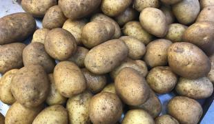 Les pommes de terre au four explosent-elles vraiment si on oublie de les piquer ?
