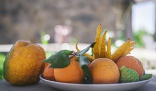 L'Agrumiste : un zeste de passion pour des agrumes d'exception