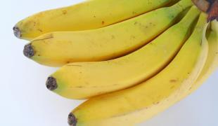 A la découverte de la banane