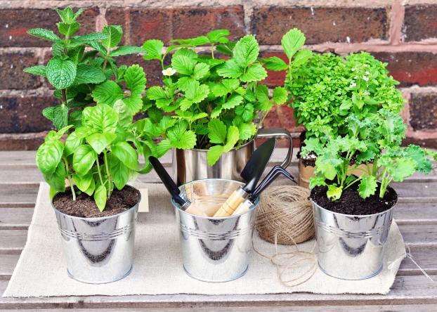 Faire Pousser Des Herbes Aromatiques Dans Votre Cuisine C Est Facile