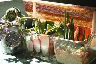 Couche à semis de primeurs - Photo par gwenSC