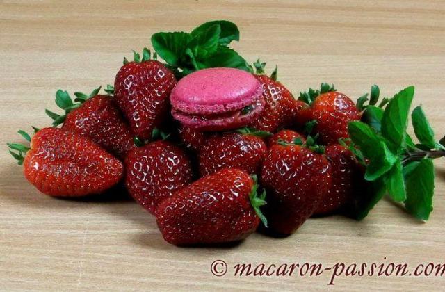 Macarons fraise menthe - Photo par macaron-passion