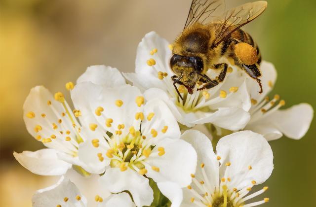 Pourquoi vous allez adorer le pollen alimentaire - Photo par 750g