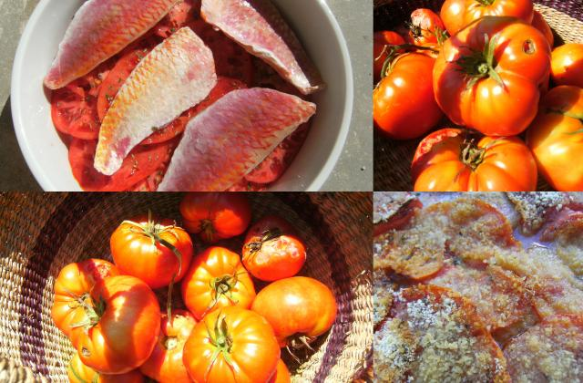 Tian de tomates aux rougets - Photo par midicu