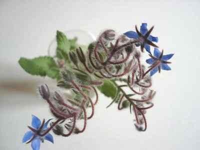 Salade de lentilles aux graines et aux fleurs de bourrache - Photo par 750g